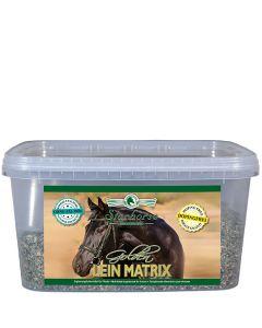 Golden Lein Matrix www.starhorse.at