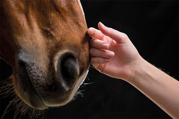 starhorse premium pferdenahrung